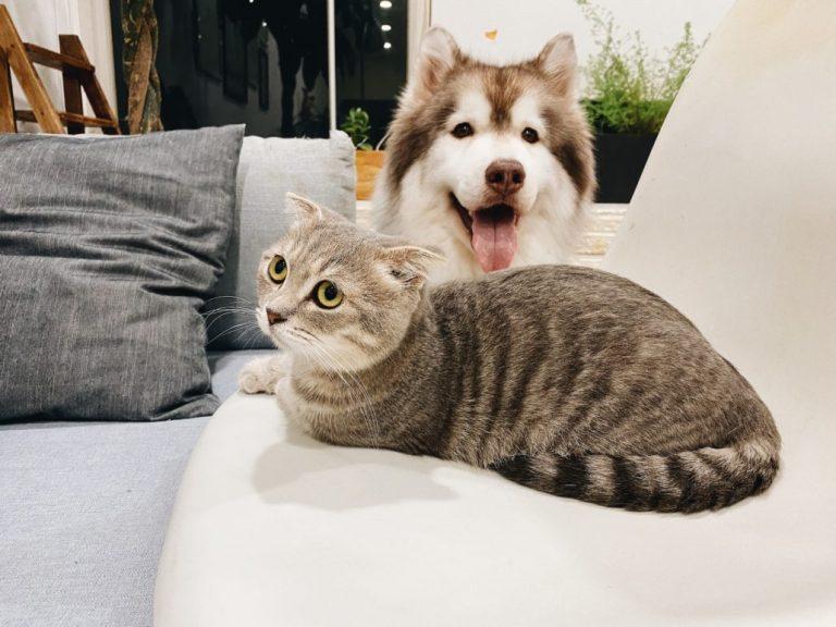 Un gato y un perro tumbados juntos e un sofa