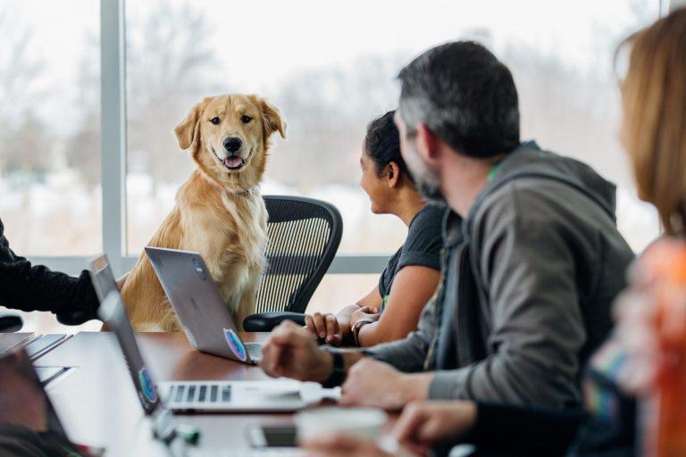 Un perro sentado en una reunión de trabajo