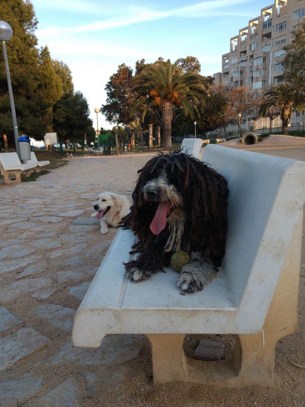 perros descansan en banco tras correr