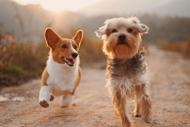 Perros haciendo ejercicio