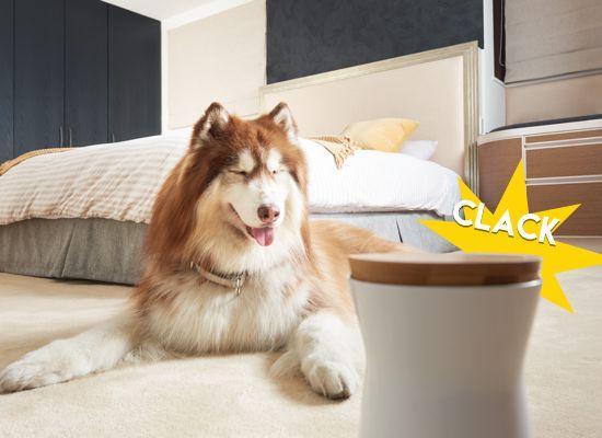 camara interactiva mascota