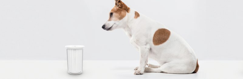 Bodeguero mira con curiosidad un limpiador de patas Petkit