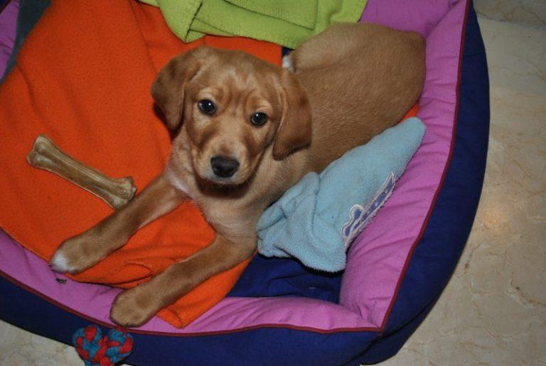 Foto de cachorro en su cama