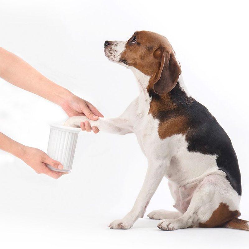 persona limpiando pata a un perro beagle con Petkit