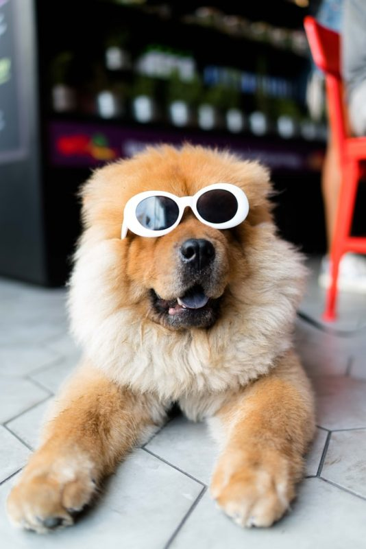 perro con regalo gafas sol