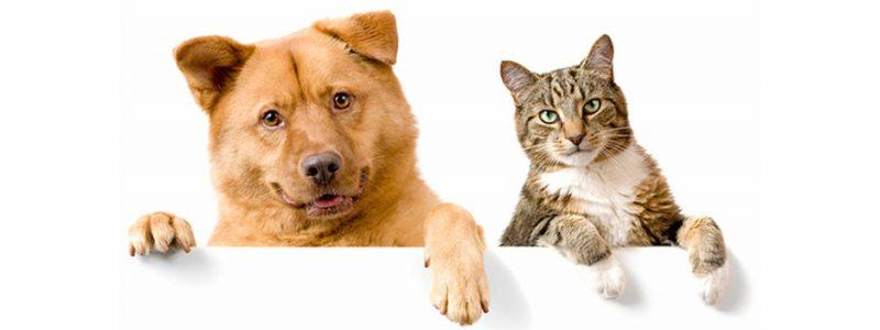 Perro y gato enseñan una patita- Limpiadores huellas