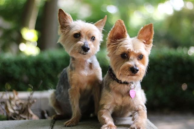 Dos perros mirando juntos mirando