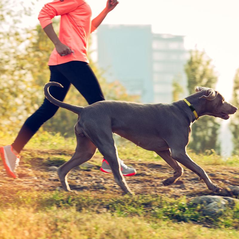 Fitbar te permite entender y controlar el ejercicio de tu mascota