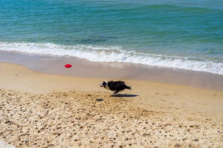 perros más rápidos en la playa
