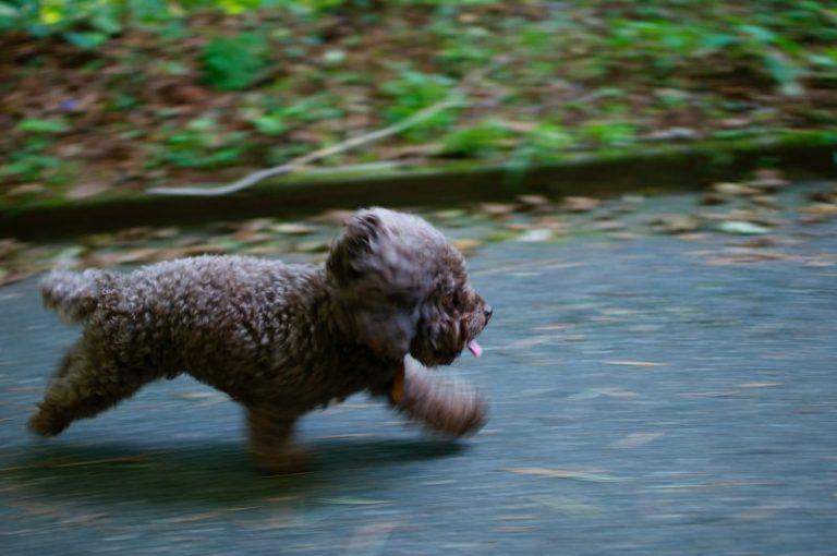 perro corriendo para escapar