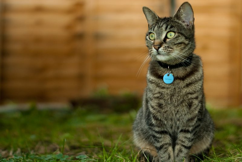 gato con gps ligero