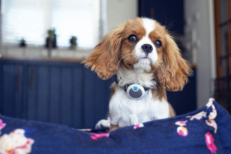 Sure Petcare Animo Monitor de actividad para perros