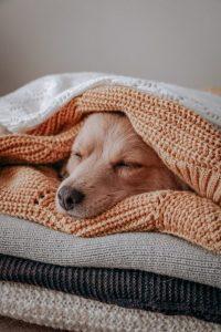 camas-perros-tipos