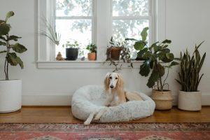 perro-cama-antiestres