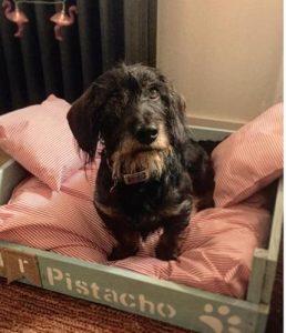 perro teckel descansa en cama de madera